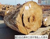 原木入札画像
