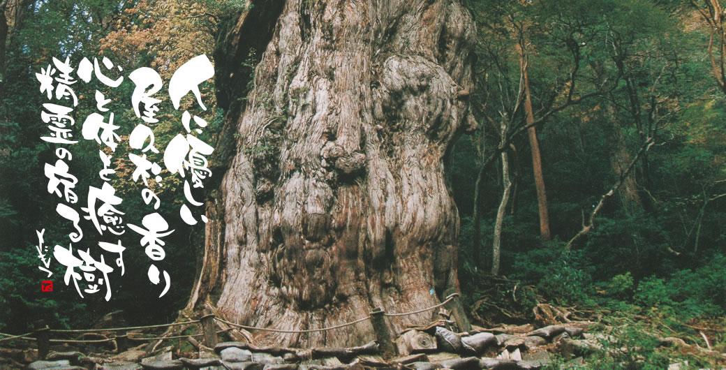 人に優しい屋久杉の香り 心と体を癒す 精霊の宿る樹 たもつ