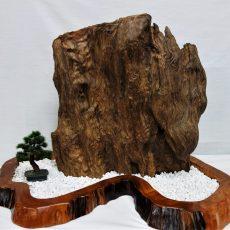 屋久杉 原木